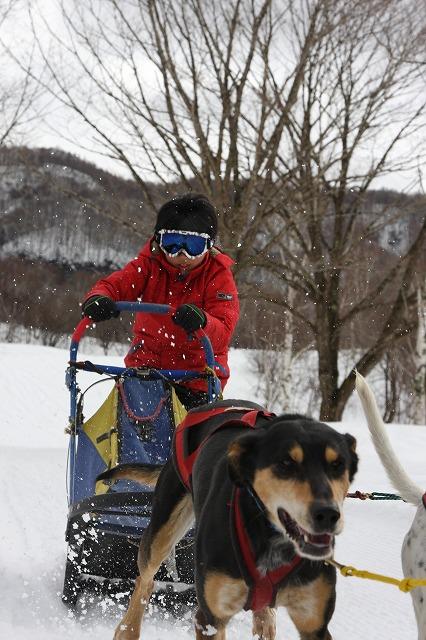 ナイトスノーシュー&犬ぞり 1回目報告