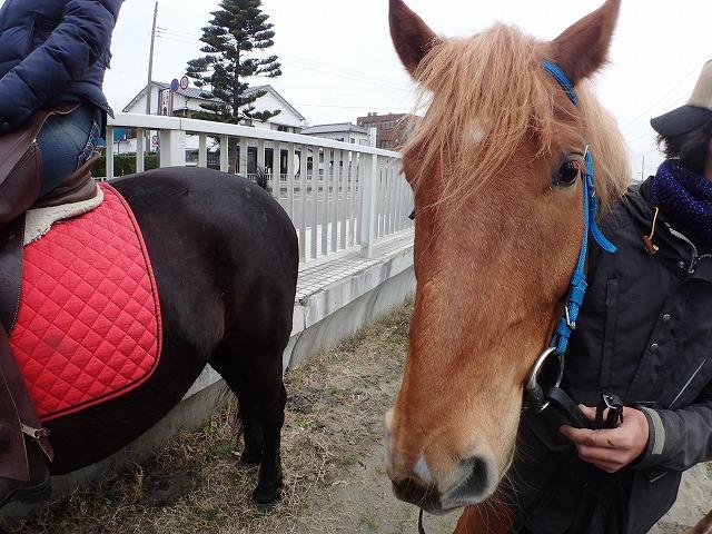 日本初 馬と一緒に行うプログラムEAGALA(イーガラ)開催します。