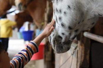 馬学び1泊2日の特別プログラム