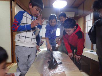 木曜日 「しぜん」魚の体の仕組みを知る サメ編