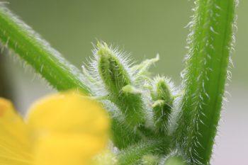 植物を植える事。そして食べるものを確保する事。