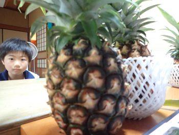 パイナップルはどこから来たのか???VR体験で調べてみよう!
